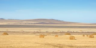 Autumn landscape with cleaned agricultural fields and golden hay rolls under blue sky royalty free stock images