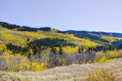 Autumn Landscape in Colorado stock photos