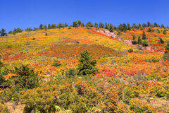 Autumn landscape in Colorado Royalty Free Stock Photos