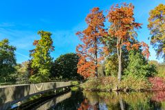 Autumn landscape colored trees over the river glowing in sunlight royalty free stock images