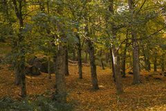 Autumn landscape. Colorful autumn forest. Royalty Free Stock Image
