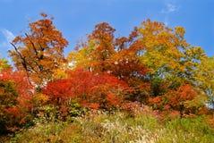 Autumn landscape of colorful corest Stock Photo