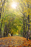 Autumn landscape. Autumn - colorful fall, outdoor landscape stock photos