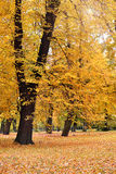 Autumn landscape. Autumn - colorful fall, outdoor landscape stock image