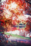 Autumn landscape with colorful foliage and lake in park, fall outdoor nature Stock Image