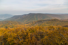 Autumn landscape with colorful forest Royalty Free Stock Photography