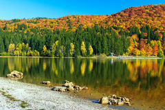 Autumn landscape and colorful forest,St Ana Lake,Transylvania,Romania Royalty Free Stock Photography
