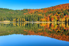 Autumn landscape with colorful forest,St Ana Lake,Transylvania,Romania. Autumn forest landscape and stunning famous volcanic lake in Transylvania,St Anna Lake Royalty Free Stock Photography