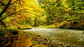 Autumn landscape, colorful leaves on trees, morning at river after rainy night. Colorful leaves. Autumn stream. Forest river.
