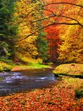 Autumn landscape, colorful leaves on trees, morning at river after rainy night. Fresh green mossy stones and boulders on river bank covered with colorful Royalty Free Stock Photo