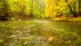 Autumn landscape, colorful leaves on trees, morning at river after rainy night. Colorful leaves. Autumn stream. Forest river. November scene.Fall morning river stock footage