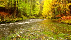 Autumn landscape, colorful leaves on trees, morning at river after rainy night. Colorful leaves. Autumn stream. Forest river. November scene.Fall morning river stock video footage