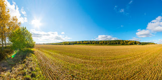 Autumn landscape. Colorful sunny day. Green fields and yellow trees. Stock Photo