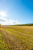 Autumn landscape. Colorful sunny day. Green fields and yellow trees. Stock Images