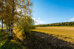 Autumn landscape. Colorful sunny day. Green fields and yellow trees. Stock Photos
