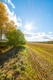 Autumn landscape. Colorful sunny day. Green fields and yellow trees. Royalty Free Stock Images