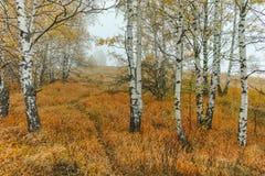 Autumn Landscape com árvores amarelas, montanha de Vitosha, Bulgária Fotos de Stock