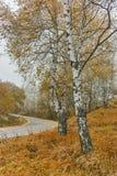 Autumn Landscape com árvores amarelas, montanha de Vitosha, Bulgária Foto de Stock