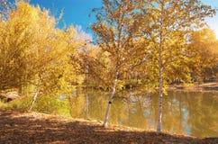 Autumn landscape. Royalty Free Stock Photos