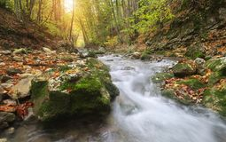 Autumn landscape. River into canyon royalty free stock photography