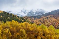 Autumn Landscape con el bosque del abedul en las montañas Fotografía de archivo