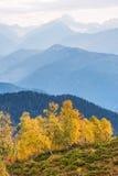Autumn Landscape con el bosque del abedul en las montañas de Georgia Fotografía de archivo libre de regalías