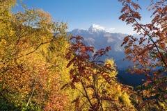 Autumn Landscape con el bosque y la cordillera del abedul Imágenes de archivo libres de regalías