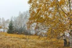 Autumn Landscape con gli alberi e la nebbia gialli, montagna di Vitosha, Bulgaria fotografia stock
