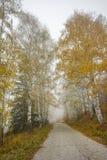 Autumn Landscape con gli alberi e la nebbia gialli, montagna di Vitosha, Bulgaria immagini stock