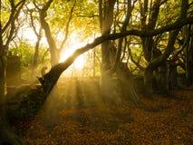 Autumn Landscape con la iluminación dramática en Aberdeen Imagen de archivo