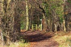 Autumn Landscape con la pista entre los árboles Foto de archivo libre de regalías