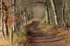 Autumn Landscape con la pista entre los árboles Fotografía de archivo