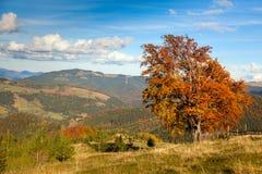 Autumn Landscape con panorama colorido grande del árbol y de la montaña Imagenes de archivo
