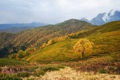 Autumn Landscape con un árbol de abedul en las montañas de Georgia Foto de archivo