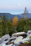 Autumn Landscape con un abedul en un canto Fotografía de archivo