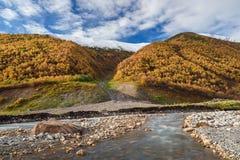 Autumn Landscape con un río de la montaña y un bosque del abedul Imagen de archivo