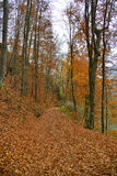 Autumn landscape with country road covered with leaves Royalty Free Stock Photos