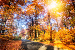 Autumn landscape with country road Royalty Free Stock Images