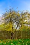 Autumn Landscape d'arbre jaune branchu près de barrière Photo stock