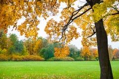 Autumn Landscape Dalingsscène Royalty-vrije Stock Afbeeldingen