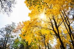 Autumn Landscape Dalingsscène Stock Foto