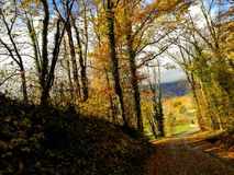 Autumn Landscape de oro maravilloso imagen de archivo