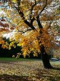 Autumn Landscape de oro maravilloso foto de archivo