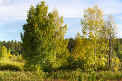 Autumn landscape deciduous trees. Climax, stable ecosystem, purity of nature, Sumy region, Ukraine, net area. Sustainable Stock Photography