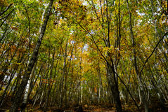 Autumn landscape of deep forest Stock Photography