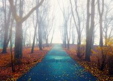 Autumn landscape - autumn park alley with bare trees and dry fallen orange autumn leaves in the fog. Autumn landscape - deserted foggy autumn park alley with stock images