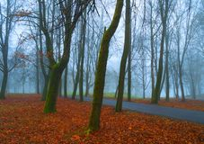 Autumn landscape - deserted autumn park alley with trees and dry fallen orange autumn leaves in foggy weather. Autumn November foggy landscape. Deserted autumn stock photography