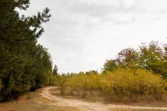 Autumn landscape with dirt road. And yellow trees Stock Photography