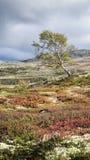 Autumn landscape in Dovrefjell National Park Royalty Free Stock Photo