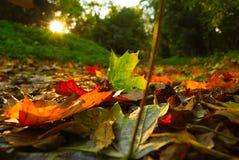 Autumn Landscape e por do sol Fotografia de Stock Royalty Free